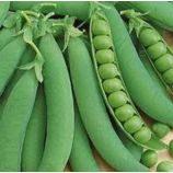 Детский восторг семена гороха овощного раннего 43-48 дн 60 см (GL Seeds)