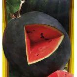 Тюльпан семена арбуза раннего окр(GL Seeds)