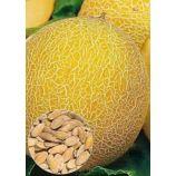Казачка семена дыни средней 70-85 дн. окр. 1,2-1,8 кг (GL Seeds)