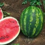 Альянс семена арбуза среднего 70-75 дн. окр. 6-6,5 кг (GL Seeds)