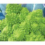 Наталино семена капусты тип Романеско поздней 115-120 дн. 0,8-1,0 кг зел. (GL Seeds)