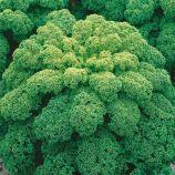 Зеленая семена капусты листовой среднеспелой (Семена Украины)