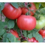 Демидов семена томата дет. среднего 105-110 дн. окр. 110-150 гр. роз. (GL Seeds)