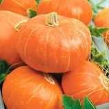 Бамбино семена тыквы средней окр. 6-10 кг (GL Seeds)