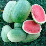 ЛС 1803 F1 (LS 1803 F1) семена арбуза раннего 12-15 кг овал. св.зел. (Lucky Seed)