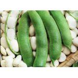 Иголомская семена фасоли овощной кустовой 90-120 дн. белая (Свитязь)