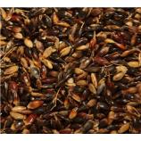 Суданская трава семена (Семена Украины)