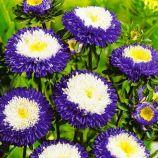 Суприм Биколор семена астры 55-60см (GL Seeds)