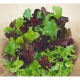 Витаминное Асорти семена салата беби листового раннего 20-25 дн. (Семена Украины)