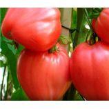 Кардинал семена томата идет. раннего 105-115 дн. серцепод. 400-800г роз. (Семена Украины)