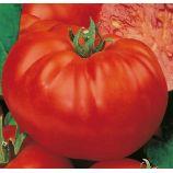 Богатырь семена томата индет. среднего 110-120дн. плоско-окр. 350-400гр. роз-красн. (Семена Украины)