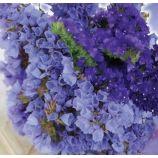 Блю Айс (сухоцветы) семена статицы 60-80см (GL Seeds)