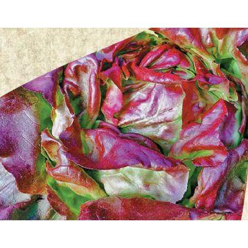 Редкросс семена салата тип Маслянистый красн. (Satimex СДБ)