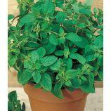 Майоран Садовый семена (Семена Украины)