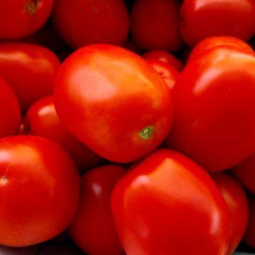 Албароссо F1 семена томата дет. ультрараннего 85-90 дн. слив. 70-80 гр. красный (Cora Seeds)