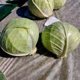Ларсия F1 семена капусты б/к средней 4-8 кг (Seminis)