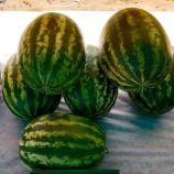Сансвит F1 (Сан Свит F1, Sun Sweet F1) семена арбуза тип кр.св. среднего 13-15 кг окр. (Cora Seeds)