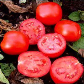Волли Ред F1 семена томата дет. среднераннего 110-115 дн. слив. 70 гр. (Esasem)