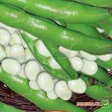 Трижды белые семена бобов средних 80-90 дн. (GL Seeds)