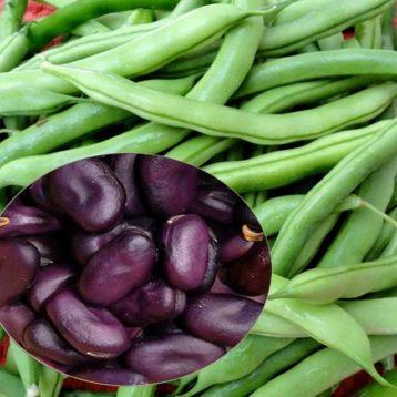 Экстра Грано Виолетто семена бобов (GL Seeds)