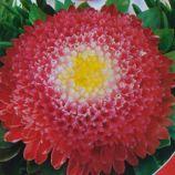 Супер Принцесса семена астры 40-50см (GL Seeds)