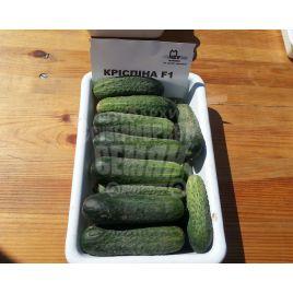 Криспина F1 семена огурца партенокарп. ультраранн. 40-42 дн. 10-12 см (Bayer Nunhems)