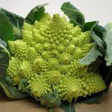 Романеско насіння капусти броколі середньоранньої (Satimex СДБ)