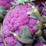 Вайлет Стар семена капусты цветной поздней 110-120 дн.0,5-1,5 кг фиолет. (Satimex СДБ)