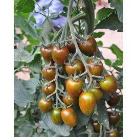 Криспина плюм F1 семена томата индет. кокт. раннего 65-70 дн. слив. 30 гр. полос. (Esasem)