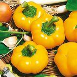 Топепо Еллоу семена перца сладкого тип Ротунда раннего окр. 100-110 гр. 10 мм зел./желт. (Hortus)