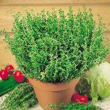 Тимьян (чебрец) семена тимьяна (SAIS)