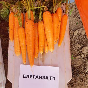 Элеганс F1 (Элеганза F1) (1,6-1,8) семена моркови Нантес поздней 120-130 дн. (Nunhems)