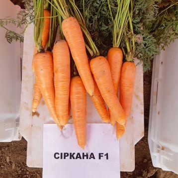 Сиркана F1 (1,8-2,0) семена моркови Нантес средней 110-120 дн. (Nunhems)