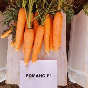 Романс F1 (2,0-2,2) семена моркови Нантес позднеспелой 110-120 дн. (Nunhems)