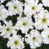 Крайковый завой F1 белая (white) семена петунии бахром. 30-35см (Cerny СДБ)