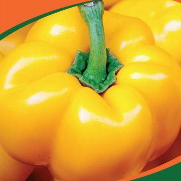 Золотой фазан семена перца (Професійне насіння)