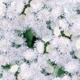 Нептун F1 белый (white) семена агератума (GL Seeds)
