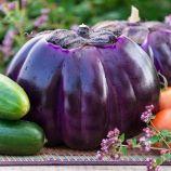 Флоренция семена баклажана раннего 75 дн. 11-12 см окр. (Hortus)