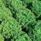 Финстар семена салата тип Фриллис раннего зел. дражированные (Nunhems)