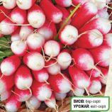 18 Дней семена редиса с БК цилинд. 18 дн. (Servise plus (GSN) СДБ)