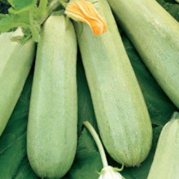 Грибовский 37 семена кабачка раннего 40-45 дн. 0,7-1,3 кг св.-зел. (Свитязь) НЕТ ТОВАРА