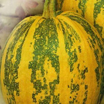 Украинская многоплодная семена тыквы ранней 85-90дн 5-8кг окр.-овал. (Свитязь) НЕТ ТОВАРА