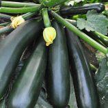 Черный красавец семена цуккини раннего 40-50 дн. 0,9-1,5 кг тем.-зел. (Украина СДБ)