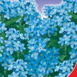 Небесная ласточка семена незабудки 25-30см (GL Seeds)