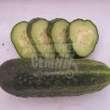 Сатіна F1 насіння огірка партенокарпічного (Nunhems)