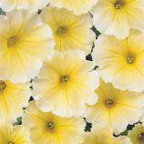 Петуния Мираж желтая (yellow)