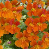 Мимулюс Мистик оранжевый (orange)