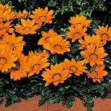 Газания Кисс F1 оранжевая (orange)