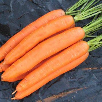 Цидера семена моркови Нантес поздней 145-155 дн. (Semenaoptom)