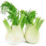 Фенхель овочевий